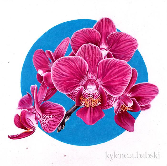 Phalaenopsis .