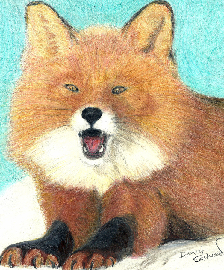 Red Fox