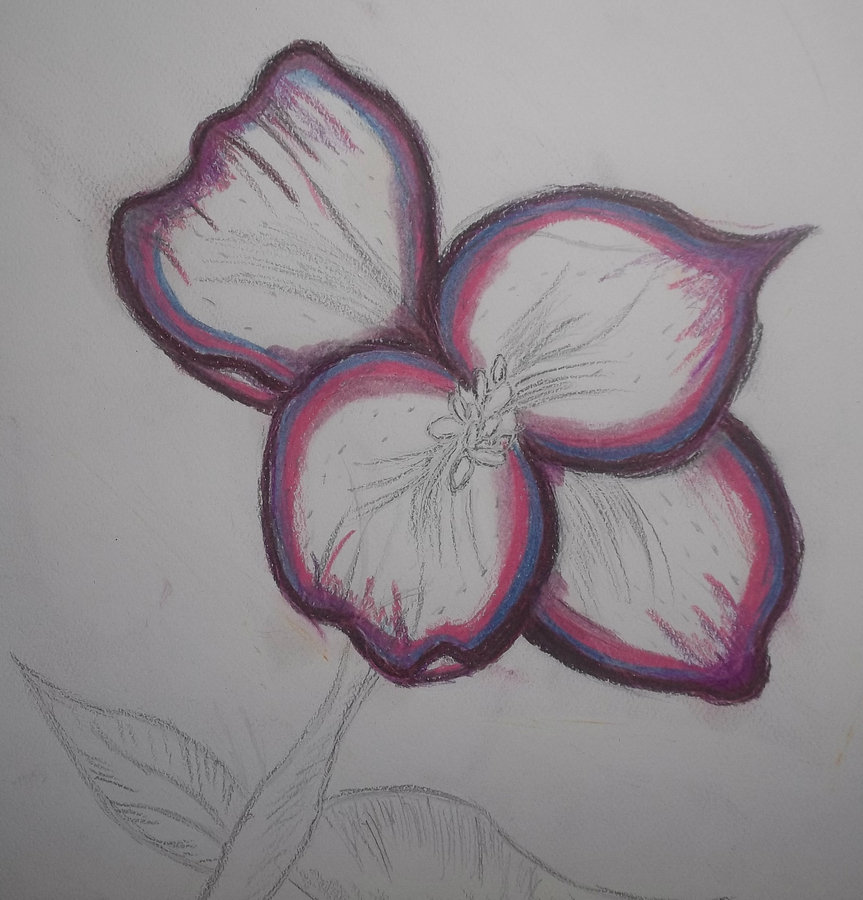 purple and pink flower part 1