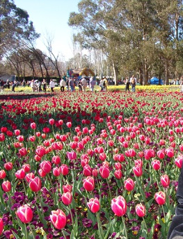 Annual Floriade flower festival Canberra