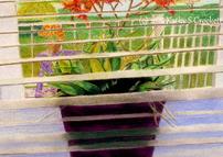Pot of Grasses on the Windowsill