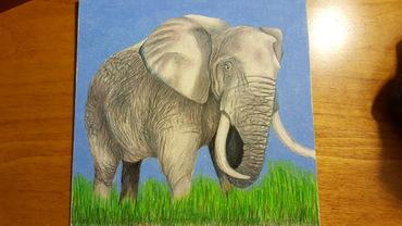 Just an elephant