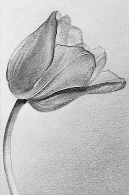 A Tulip for Sharon