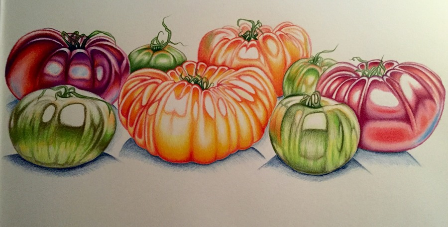 """Tomatoes"" Still life in progress"
