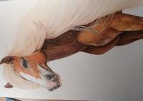 Gypsy the  Palomino Pony