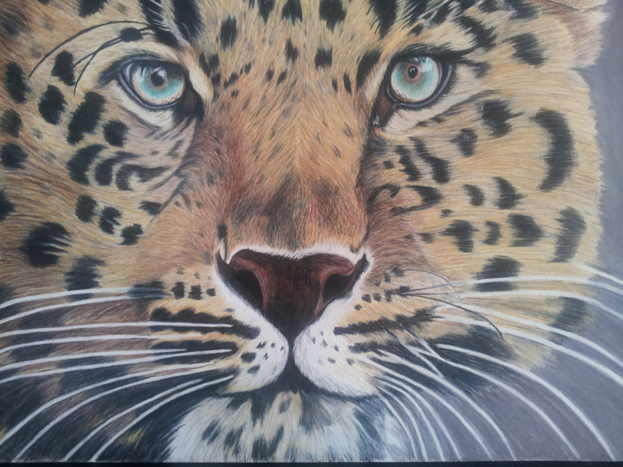 in progress - leopard