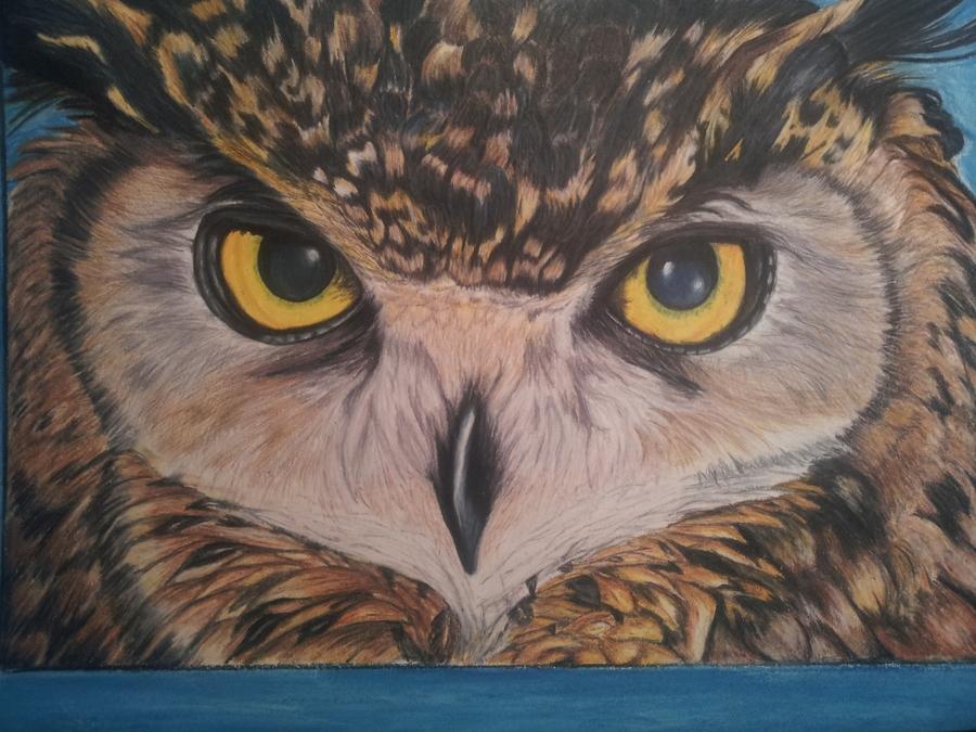 in progress - Owl