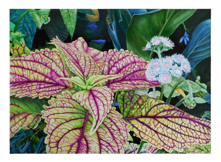 Botanic Gardens Coleus