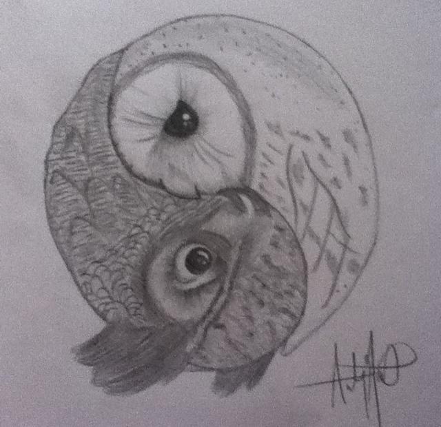 Ying and Yang owls