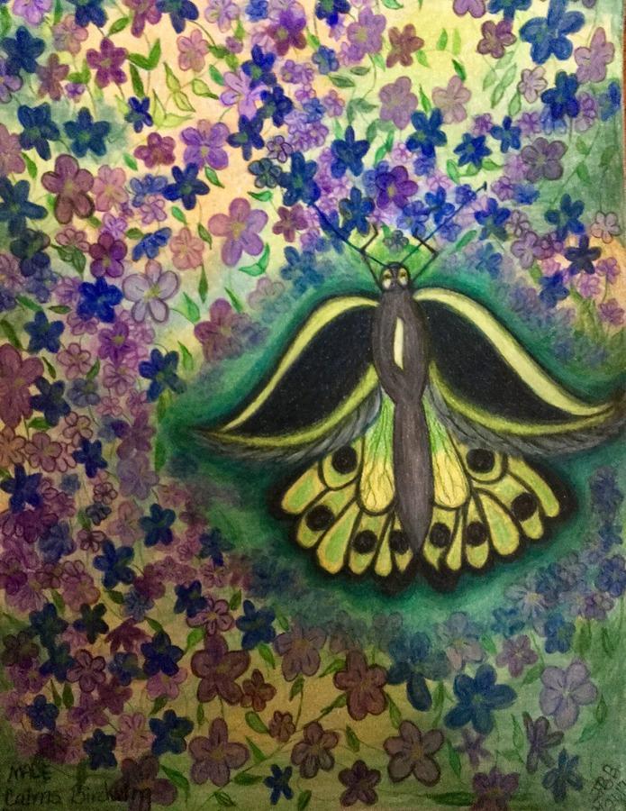 Butterfly & the Jonny Jump Up's