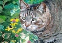 Miss Garden Kitty