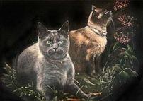 Play Fetch Kitties