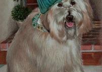 Stylish Pup
