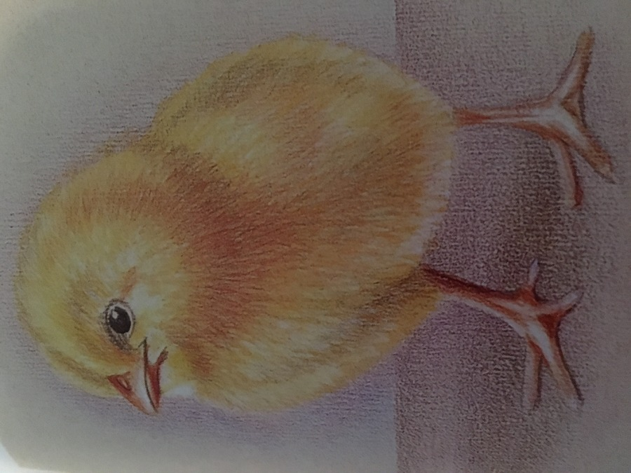 Prismacolor Baby Chick